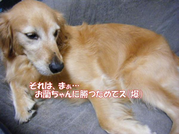 DSCF6054_20120729001659.jpg