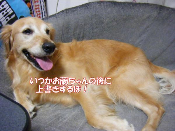 DSCF6065_20120729001717.jpg