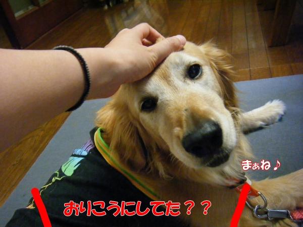 DSCF6093_20120731231140.jpg