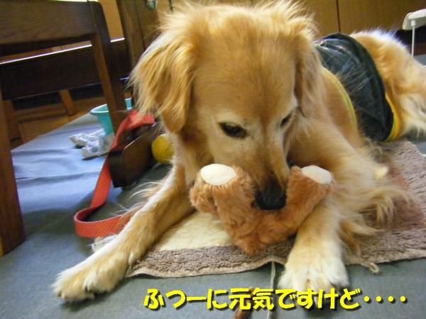DSCF6100_20120731234121.jpg