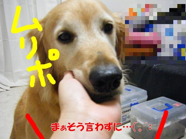 DSCF6305_20120810011632.jpg