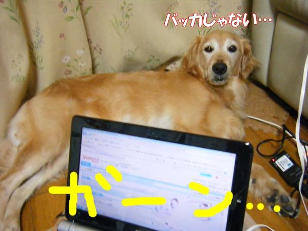 DSCF6309_20120811234945.jpg