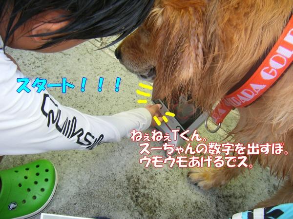 DSCF6407_20120819224224.jpg