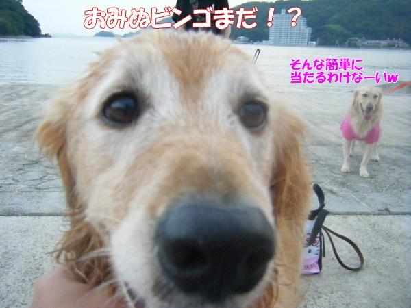 DSCF6438_20120819231010.jpg