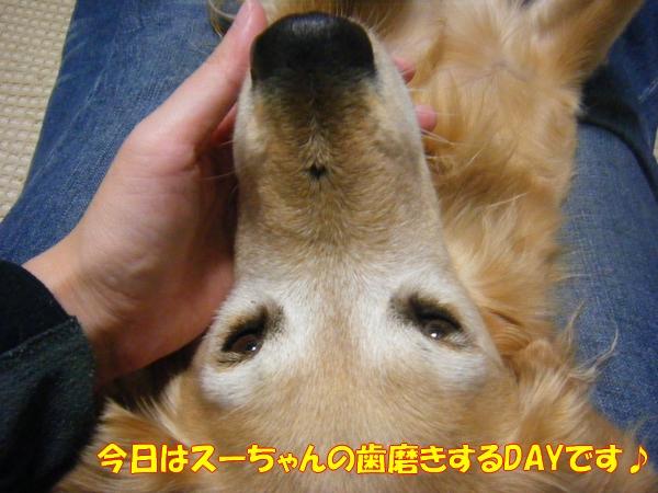 DSCF6490_20121028005456.jpg