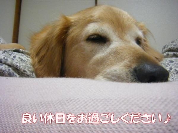 DSCF6526_20121028003458.jpg