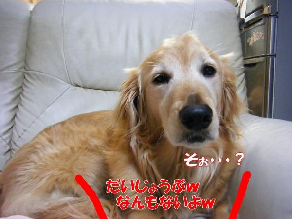 DSCF9010_20120519235214.jpg