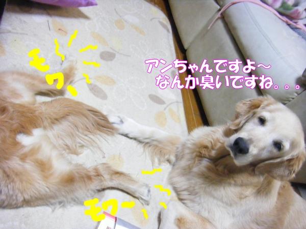 DSCF9024_20120522001202.jpg