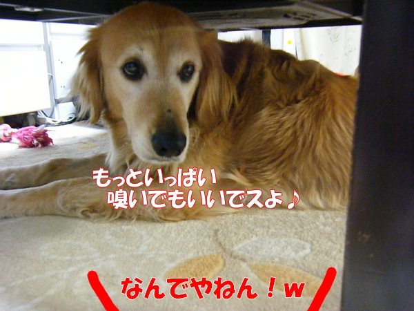 DSCF9025_20120522001201.jpg