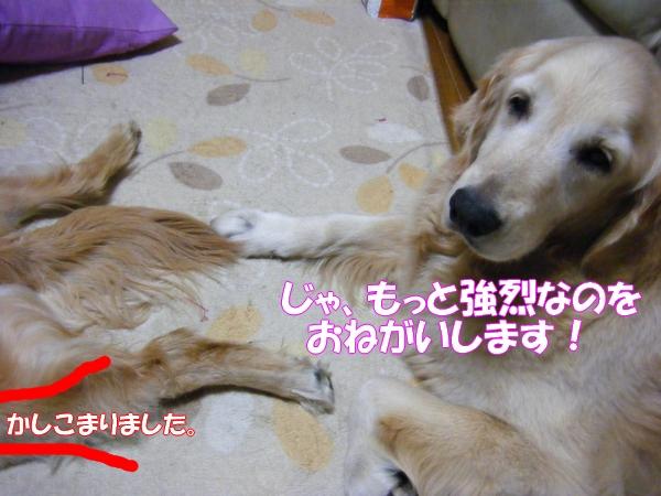 DSCF9026_20120522001201.jpg