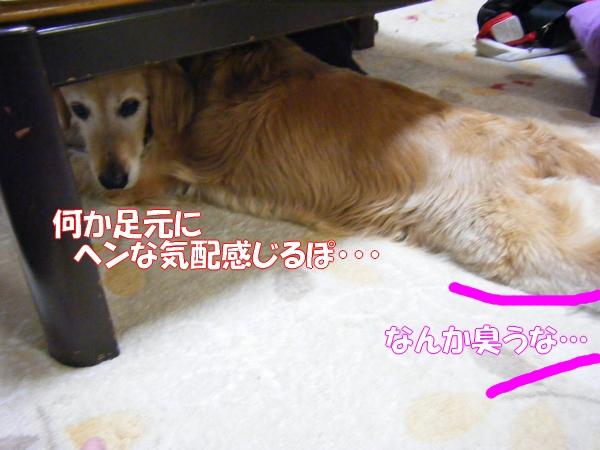DSCF9027_20120522001201.jpg