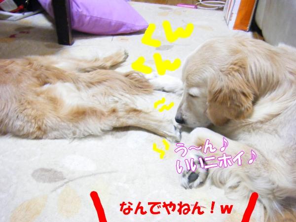 DSCF9028_20120522001200.jpg