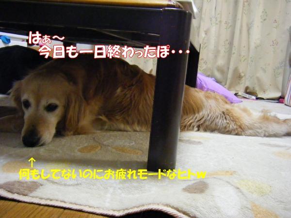DSCF9030_20120522001200.jpg