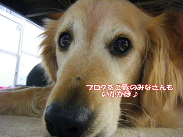 DSCF9032_20120522001222.jpg