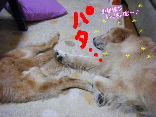 DSCF9033_20120522001222.jpg