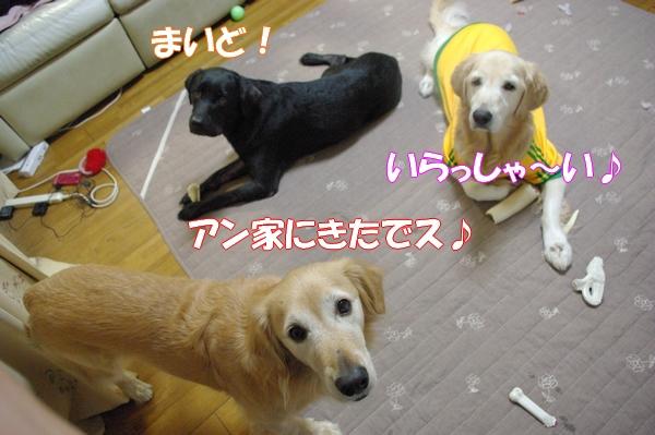 IMGP0010_20121020001056.jpg