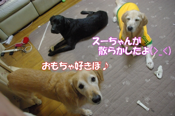 IMGP0011_20121020001055.jpg