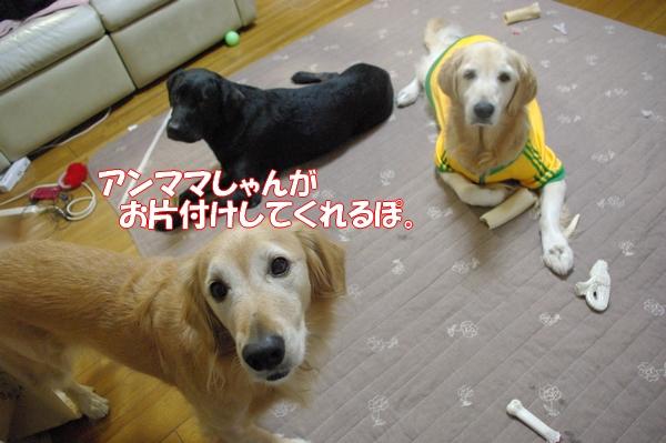 IMGP0014_20121020001054.jpg