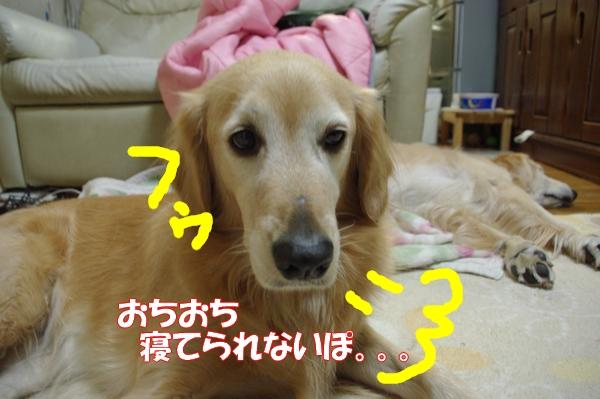 IMGP4177.jpg