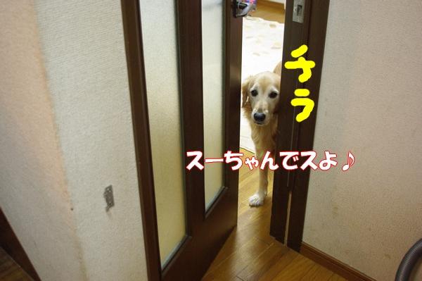 IMGP4182.jpg