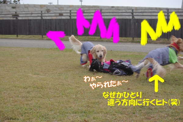 IMGP4233.jpg