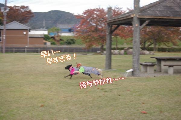 IMGP4250_20121113002832.jpg