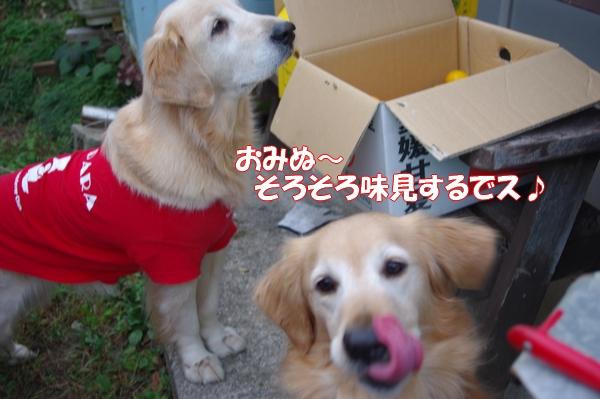 IMGP4452_20121121004321.jpg