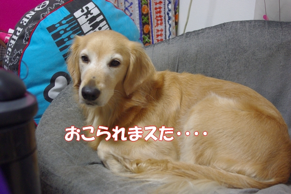 IMGP4522_20121219005556.jpg