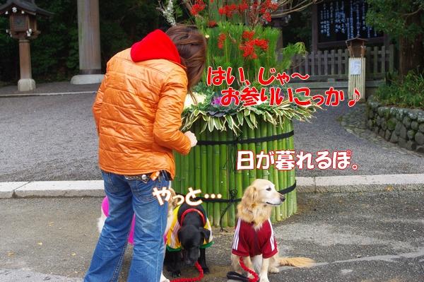 IMGP5046_20121221003521.jpg