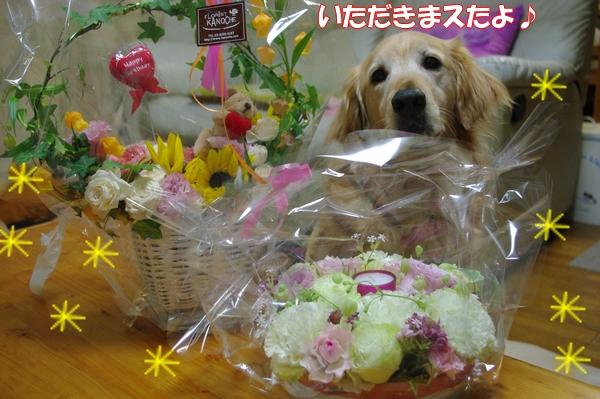IMGP8859_20120523001831.jpg