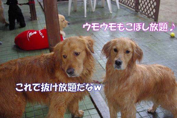 IMGP9063_20120508000942.jpg