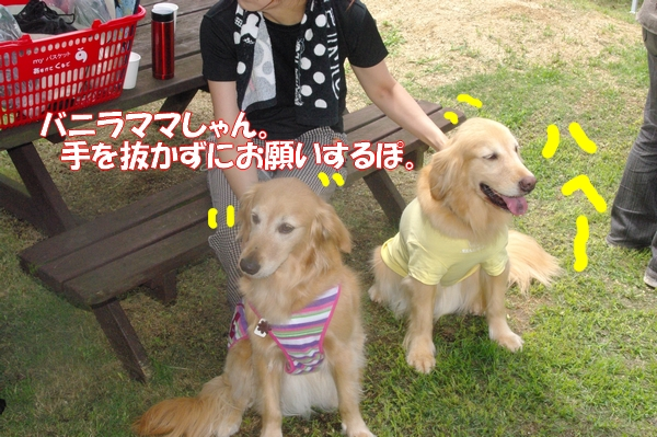 IMGP9131_20120712000050.jpg