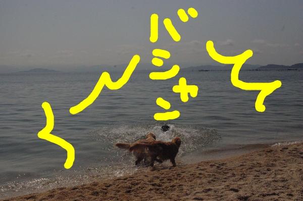 IMGP9134_20120512003313.jpg