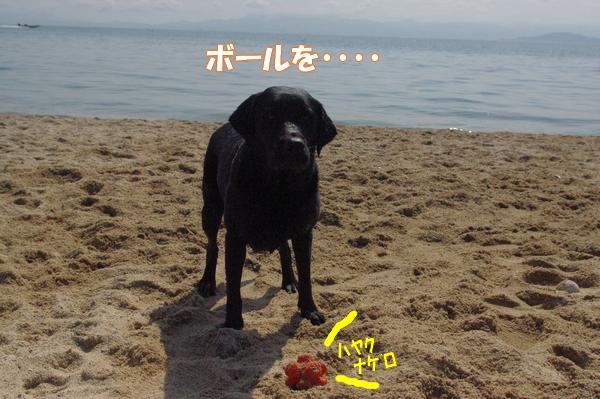 IMGP9147_20120512003312.jpg