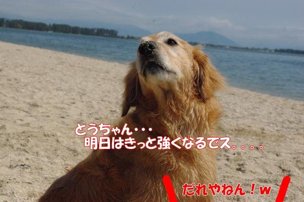 IMGP9179_20120516003121.jpg