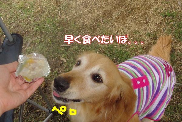 IMGP9181_20120713002139.jpg