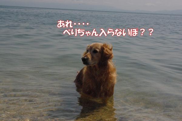 IMGP9201_20120512003350.jpg
