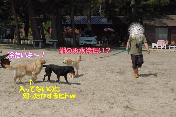 IMGP9203_20120512003349.jpg