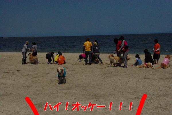 IMGP9297_20120518010438.jpg