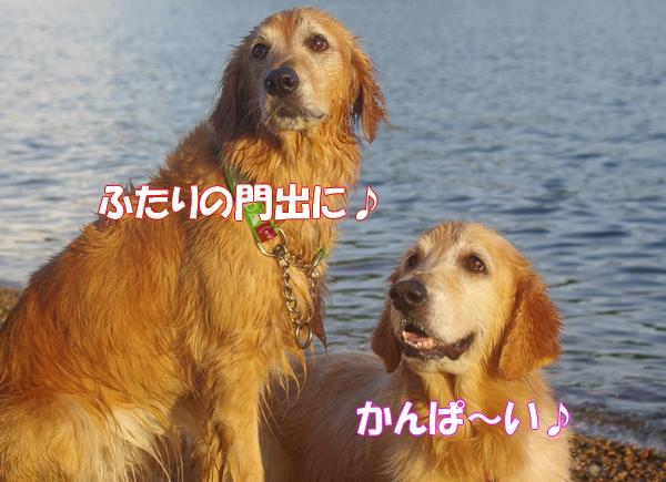 IMGP9373_20120904011704.jpg