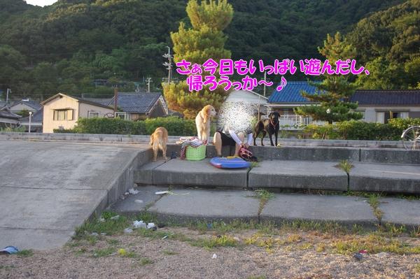 IMGP9388_20120912005033.jpg