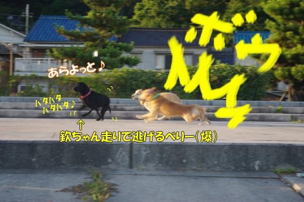 IMGP9403.jpg
