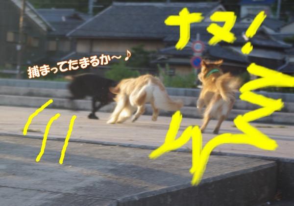 IMGP9415_20120912005056.jpg