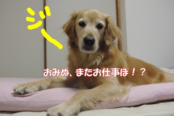 IMGP9460_20120915015831.jpg