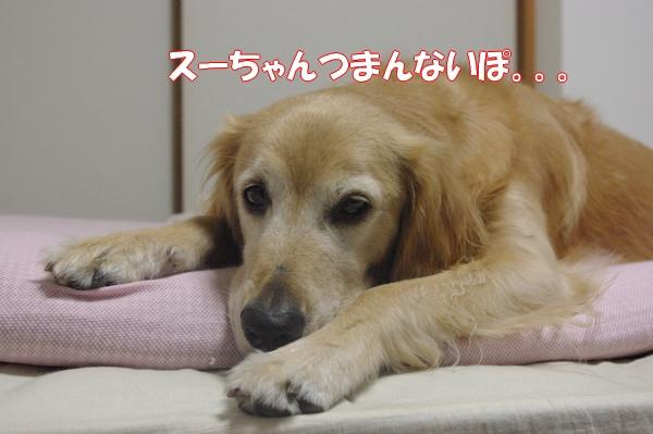 IMGP9463_20120915015830.jpg