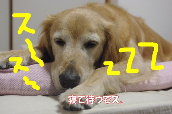 IMGP9464_20120915015830.jpg
