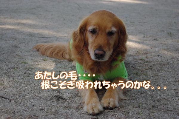 IMGP9516.jpg