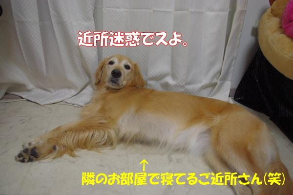 IMGP9564_20120925021541.jpg