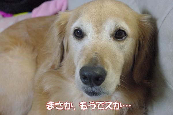IMGP9704_20121001000944.jpg