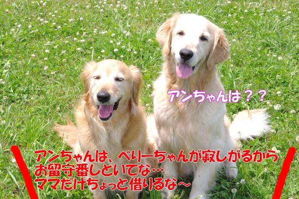 IMGP9711_20120612233003.jpg